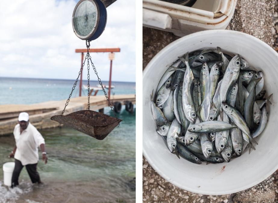 ITBF-FishermansBay-02